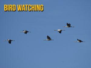 ca_bird_watching.jpg