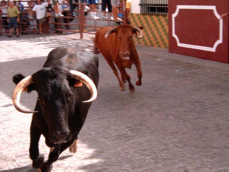 Feria_Santa_Ana_9.jpg