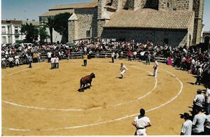 vaca1_0.jpg